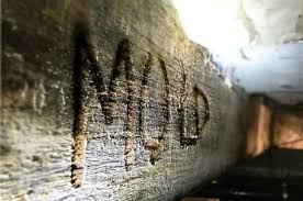 Mold removal how to deal with mold problems moldy bugs - How to deal with mold ...